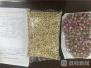 南京机场检验检疫局在分运行李中截获四纹豆象活虫