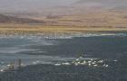 """锦州锦凌水库千余只白天鹅栖息 网友称其为""""天鹅湖"""""""
