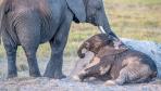 """肯尼亚:聪明大象解痒有招 白蚁丘变""""痒痒挠"""""""