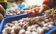 寿光蔬菜价格指数全面上涨 11月大蒜价格创新高
