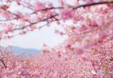 四月除了千亩樱花 新昌还有其他美景