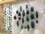 浙江一大学生收藏十余万只昆虫标本,小众爱好可年入逾十万