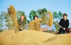 《辉煌中国》:小康中国见证粮食奇迹
