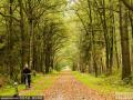 走进荷兰秋天的森林