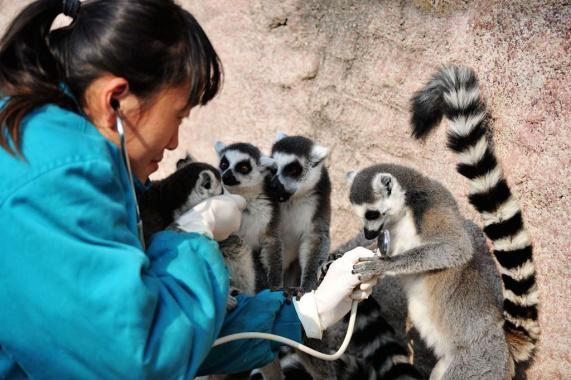 青岛:动物体检过寒冬