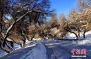 """一场强降雪后 天池旅游公路变成""""银色大道"""""""