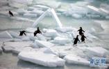 """我国出台首个南极人类活动环保管理制度 南极旅游有了环保""""紧箍咒"""""""