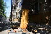 三十年樹齡玉蘭樹慘遭剝皮