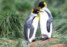 企鹅为何在草丛中?