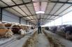 山东阳信:现代合作养殖助力精准扶贫