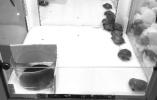无锡一商场抓娃娃机抓活乌龟 网友:虐待动物