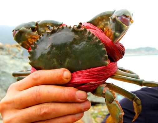 养殖蟹饱吃货口福