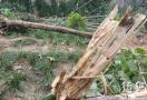 郑州一绿化廊道400多棵景观树一夜之间尽毁