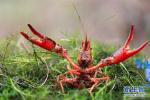 每天吃两斤小龙虾 年薪60万元!品虾师了解一下