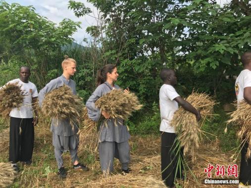 少林寺僧人组团收麦 以农入禅感受丰收喜悦