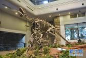 """地球还能再次""""拥有""""恐龙吗?提取恐龙DNA可行吗?"""