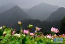 都有哪里?洛阳新增10个省级乡村旅游特色村