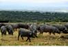 专家解读非洲猪瘟热点四问:经过检疫的猪肉可以放心食用