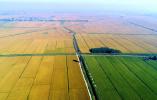 中国科学家成功克隆出杂交稻种子 有何影响?