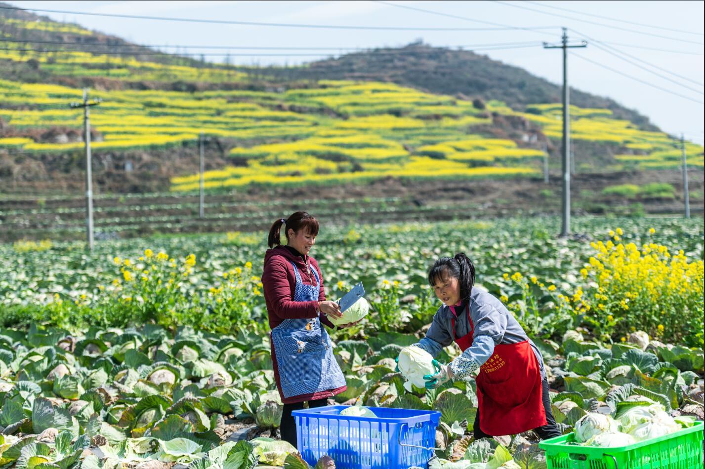 40年7亿多人脱贫 中国脱贫攻坚成就之大举世罕见