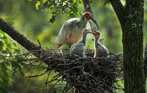 捡到幼鸟要送去救治吗?林业部门发声:尽量别动