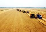 """河南:以""""粮头食尾""""推进农业供给侧结构性改革"""