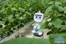 智能化技术 重构中国财富管理市场