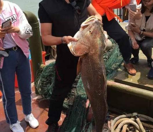 天价鱼金钱鳘卖347万,网友:一筷子下去几千块没了