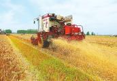 河南:今年麦收开始啦! 全省已收获188万亩