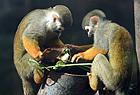 猴子们也有粽子吃