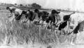 20多年前,徐州人是这样收麦的,视频太珍贵,看哭了……