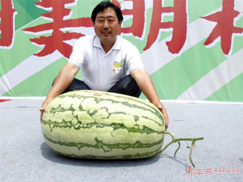 """你见过84斤的大西瓜吗?这里的西瓜曾""""上天"""""""