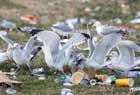 英音乐节留千吨垃圾