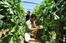 保定蠡县林堡乡 指导农民发展瓜果产业增收