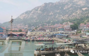 崂山海蜇大丰收 一天上岸6万斤