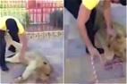 沙特母狮遭男子殴打虐待