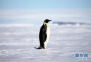 南极萌物掠影