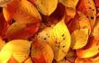 秋季养生就吃三种豆类 结合茶饮效果更好!