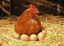 南通一晨练老汉被撞身亡 祸首竟是下蛋母鸡