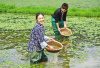 重庆70条乡村旅游线路带你体验秋收乐趣