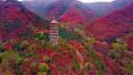 济南:红叶谷不负众望,红的彻底 ,红的灿烂