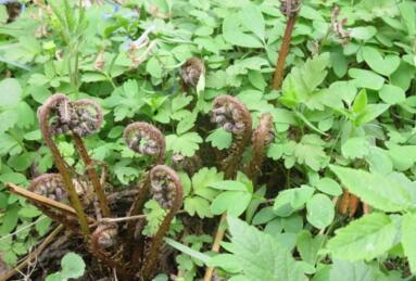 份,鲜花盛开、草木发芽,漫山遍野的翠绿中,点缀着各种各样的野菜
