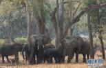 中国和莫桑比克将共同打击非法野生动物贸易