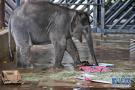 小象享用干草水果大餐