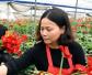 福建省连城县农户温室种植非洲菊 花开致富路