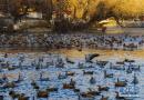冬日拉萨:龙王潭里鸟儿多