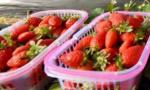 生态农业助农增收
