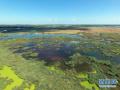 """世界湿地日来临 记者带你探访东营湿地资源""""家底儿"""""""