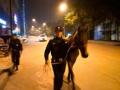 杭州上演现实版脱缰野马,13名民警全力为其鸣笛开道