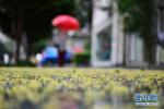 江苏全省阴有阵雨 沿江和苏南地区雨量中等局部大雨